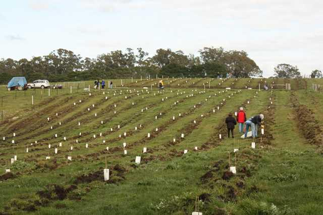 rotary_tree_planting_reduced_640x427_640x427-391